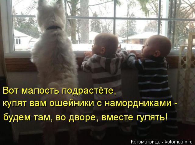 Котоматрица: Вот малость подрастёте,  купят вам ошейники с намордниками -  будем там, во дворе, вместе гулять!