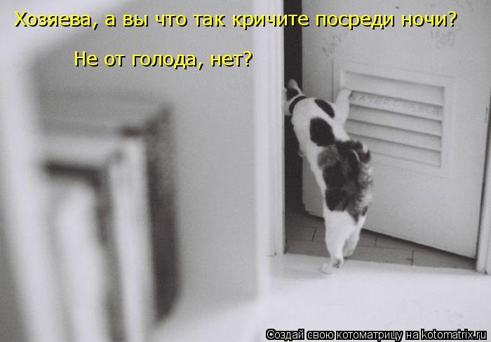 Котоматрица: Хозяева, а вы что так кричите посреди ночи? Не от голода, нет?