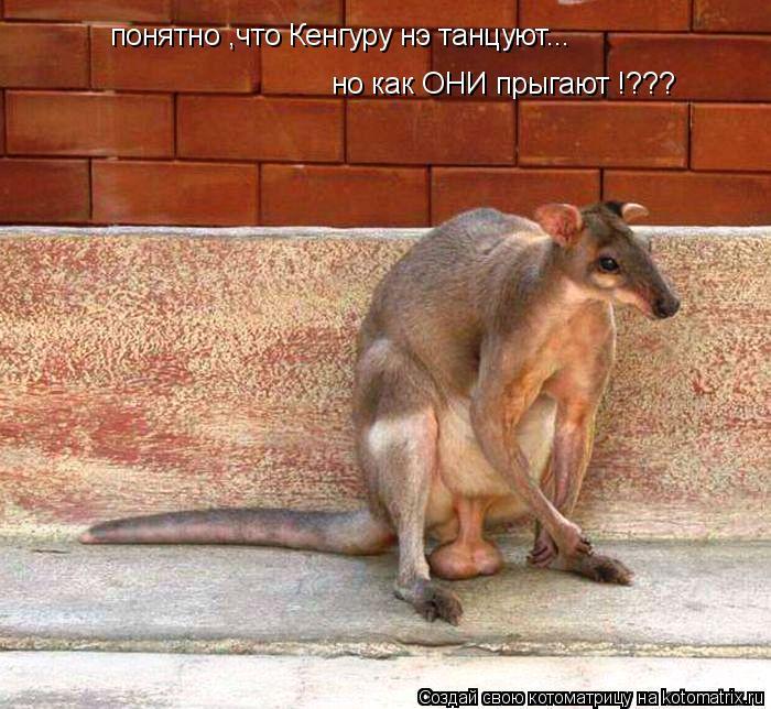 Котоматрица: понятно ,что Кенгуру нэ танцуют... но как ОНИ прыгают !???