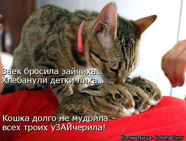 Котоматрица: Заек бросила зайчиха… Хлебанули детки лиха… Кошка долго не мудрила – всех троих уЗАЙчерила!