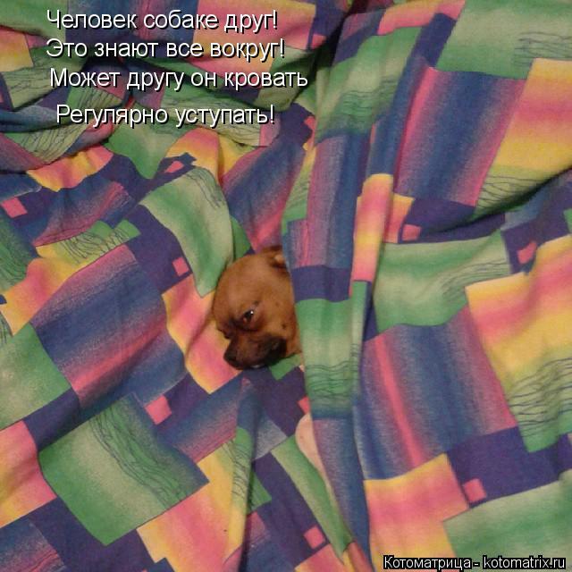 Котоматрица: Человек собаке друг! Это знают все вокруг! Может другу он кровать Регулярно уступать!