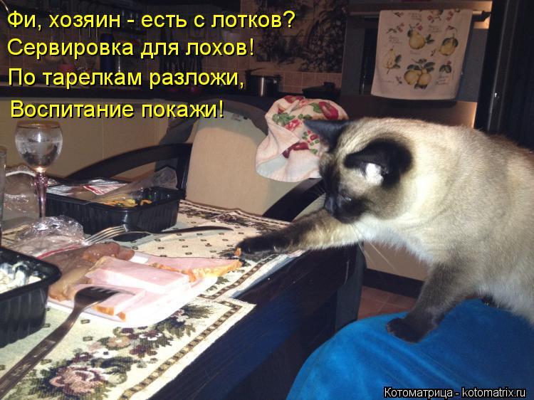 Котоматрица: Фи, хозяин - есть с лотков? Сервировка для лохов! По тарелкам разложи, Воспитание покажи!