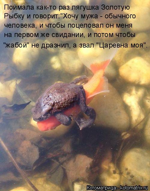 """Котоматрица: Поймала как-то раз лягушка Золотую  Рыбку и говорит:""""Хочу мужа - обычного человека, и чтобы поцеловал он меня на первом же свидании, и потом ч"""
