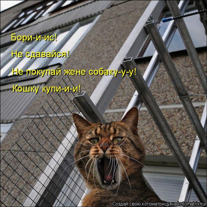 Котоматрица: Бори-и-ис! Не сдавайся! Не покупай жене собаку-у-у! Кошку купи-и-и!
