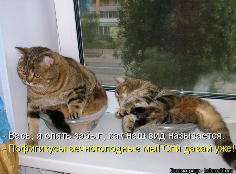 Котоматрица: - Вась, я опять забыл, как наш вид называется. - Пофигикусы вечноголодные мы! Спи давай уже!