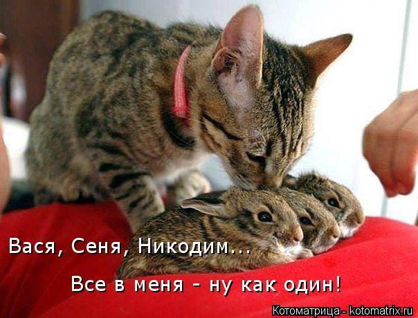 Котоматрица: Вася, Сеня, Никодим... Все в меня - ну как один!