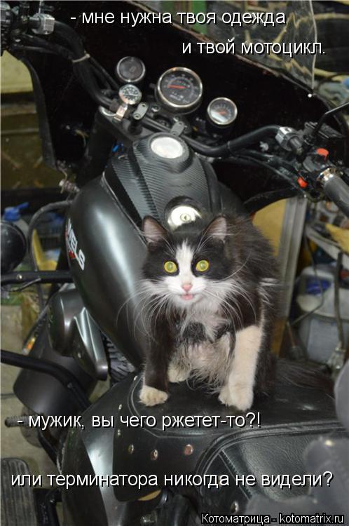 Котоматрица: - мне нужна твоя одежда  и твой мотоцикл. - мужик, вы чего ржетет-то?!  или терминатора никогда не видели?