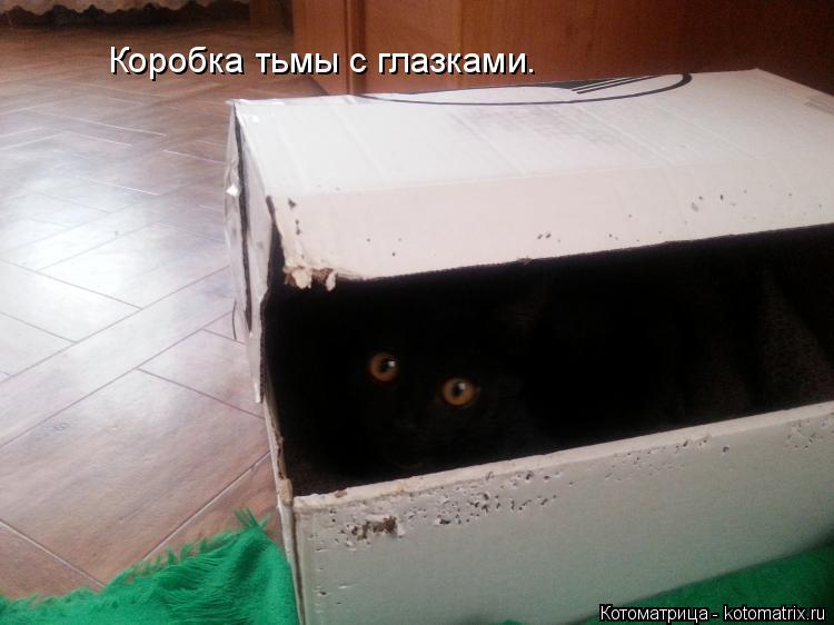 Котоматрица: Коробка тьмы с глазками.