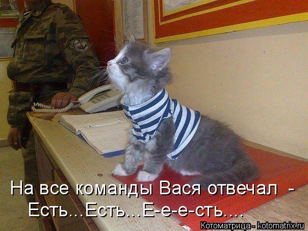 Котоматрица: На все команды Вася отвечал  - Есть...Есть...Е-е-е-сть....
