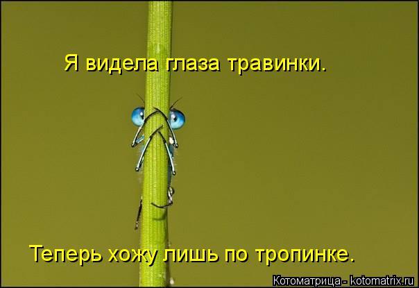 Котоматрица: Я видела глаза травинки. Теперь хожу лишь по тропинке.