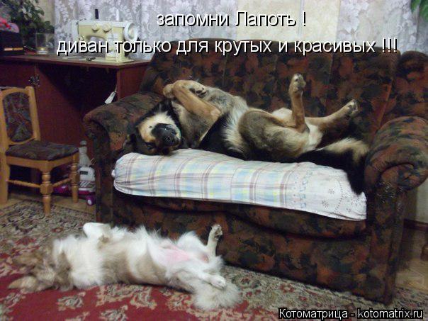 Котоматрица: запомни Лапоть ! диван только для крутых и красивых !!!