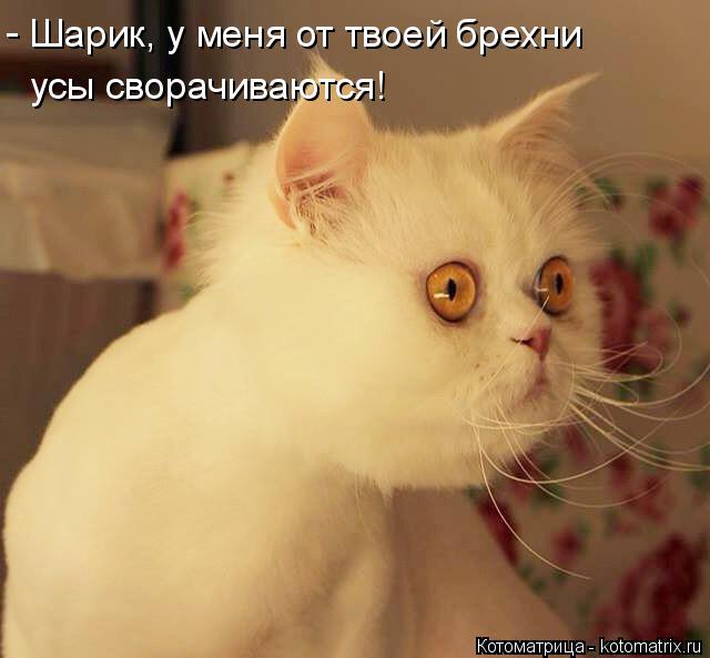 Котоматрица: Шарик, у меня от твоей брехни усы сворачиваются! -