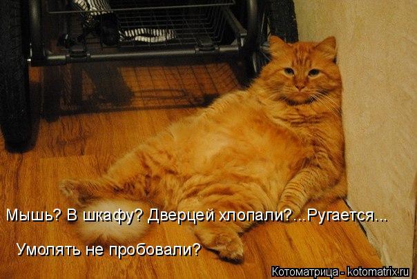 Котоматрица: Мышь? В шкафу? Дверцей хлопали?...Ругается... Умолять не пробовали?