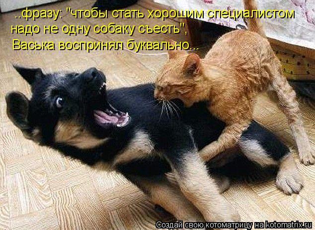 """Котоматрица: ..фразу: """"чтобы стать хорошим специалистом надо не одну собаку съесть"""", Васька воспринял буквально..."""