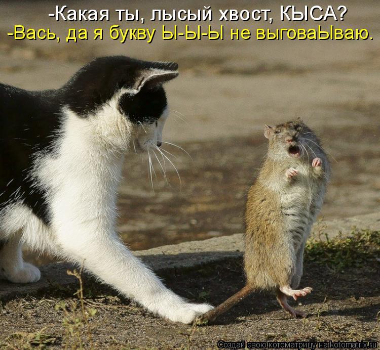 Котоматрица: -Какая ты, лысый хвост, КЫСА? -Вась, да я букву Ы-Ы-Ы не выговаЫваю.