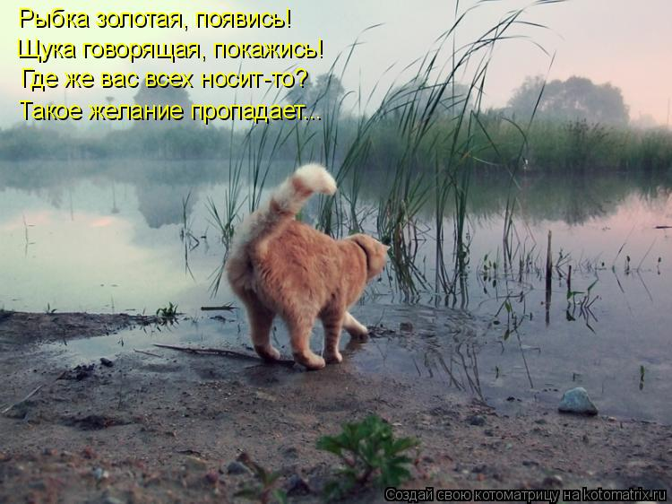 Котоматрица: Рыбка золотая, появись! Щука говорящая, покажись! Где же вас всех носит-то? Такое желание пропадает...