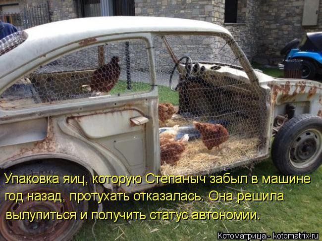 Котоматрица: Упаковка яиц, которую Степаныч забыл в машине год назад, протухать отказалась. Она решила вылупиться и получить статус автономии.