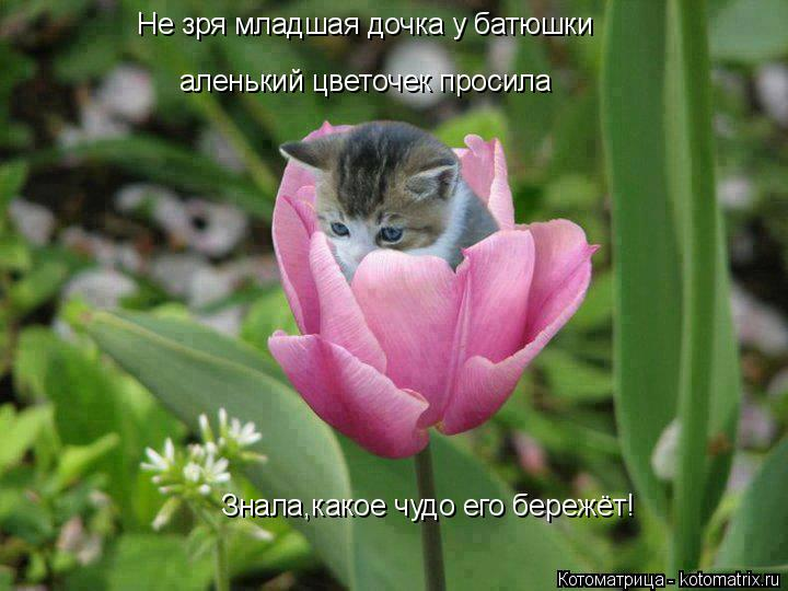 Котоматрица: Не зря младшая дочка у батюшки аленький цветочек просила Знала,какое чудо его бережёт!