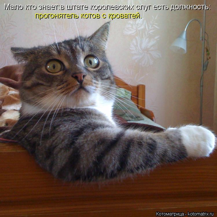 Котоматрица: Мало кто знает:в штате королевских слуг есть должность: прогонятель котов с кроватей.