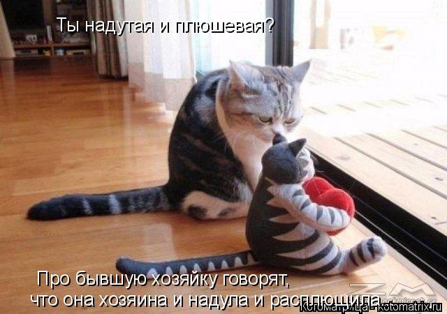 Котоматрица: Ты надутая и плюшевая? Про бывшую хозяйку говорят, что она хозяина и надула и расплющила...
