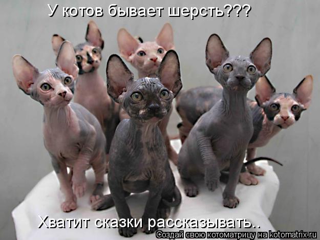Котоматрица: У котов бывает шерсть??? Хватит сказки рассказывать..