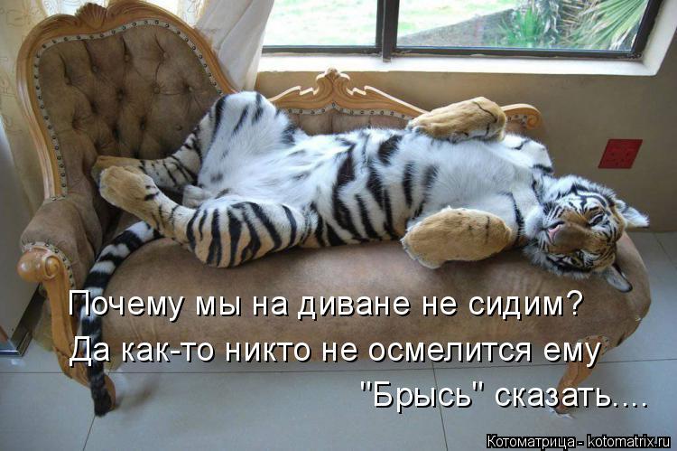"""Котоматрица: Почему мы на диване не сидим? Да как-то никто не осмелится ему  """"Брысь"""" сказать...."""