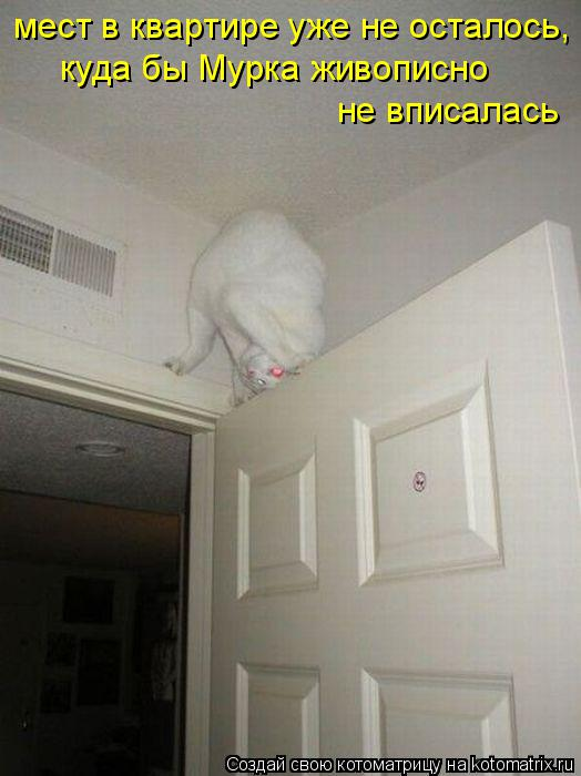 Котоматрица: мест в квартире уже не осталось, куда бы Мурка живописно не вписалась