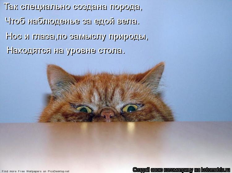 Котоматрица: Так специально создана порода, Чтоб наблюденье за едой вела. Нос и глаза,по замыслу природы, Находятся на уровне стола.