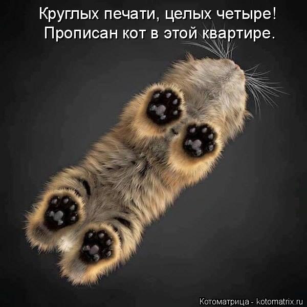 Котоматрица: Круглых печати, целых четыре! Прописан кот в этой квартире.