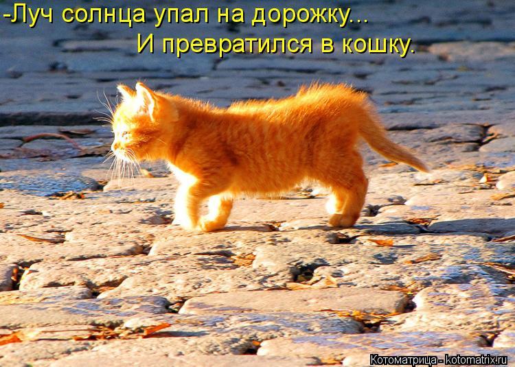 Котоматрица: -Луч солнца упал на дорожку...  И превратился в кошку.