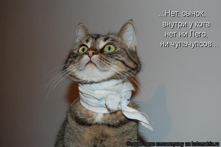 Котоматрица: ...Нет, сынок, внутри у кота нет ни Лего, ни чупачупсов...