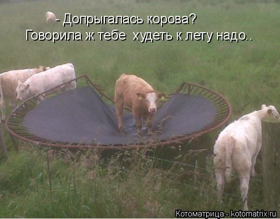 Котоматрица: - Допрыгалась корова? Говорила ж тебе  худеть к лету надо..