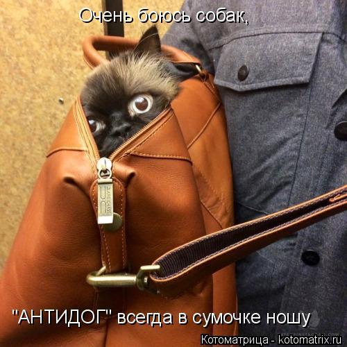 """Котоматрица: Очень боюсь собак, """"АНТИДОГ"""" всегда в сумочке ношу"""
