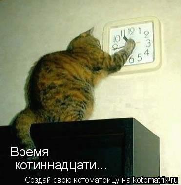 Котоматрица: Время котиннадцати...
