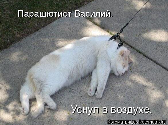 Котоматрица: Парашютист Василий. Уснул в воздухе.