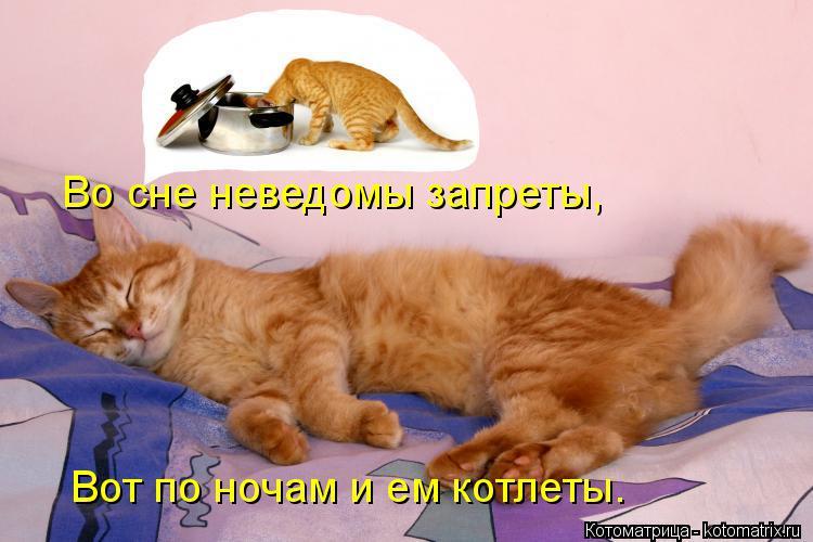 Котоматрица: Во сне неведомы запреты, Вот по ночам и ем котлеты.