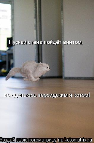Котоматрица: Пускай стена пойдёт винтом, но сделаюсь персидским я котом!