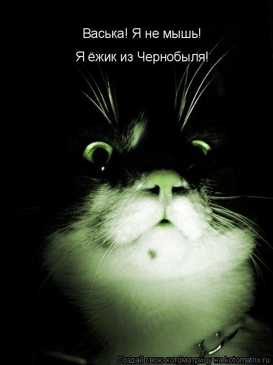 Котоматрица: Васька! Я не мышь!  Я ёжик из Чернобыля!