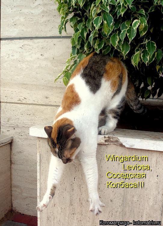 Котоматрица: Wingardium  Leviosa, Соседская Колбаса!!!