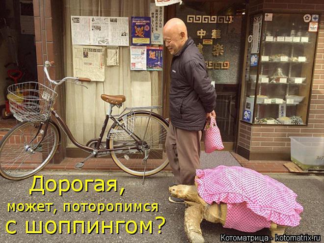 Котоматрица: Дорогая, может, поторопимся с шоппингом?