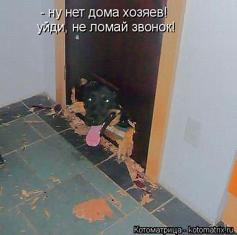 Котоматрица: - ну нет дома хозяев! уйди, не ломай звонок!