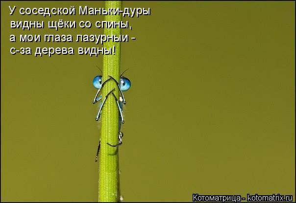 Котоматрица: У соседской Маньки-дуры видны щёки со спины, а мои глаза лазурныи - с-за дерева видны!