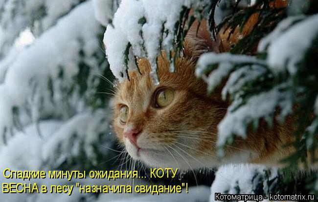 """Котоматрица: Сладкие минуты ожидания... КОТУ ВЕСНА в лесу """"назначила свидание""""!"""