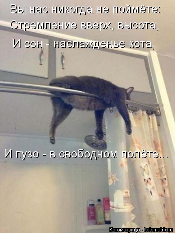Котоматрица: Вы нас никогда не поймёте: Стремление вверх, высота, И сон - наслажденье кота, И пузо - в свободном полёте...