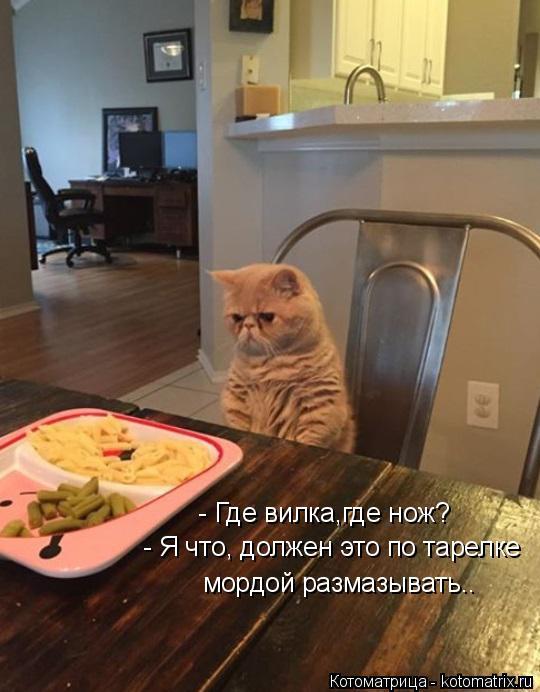 Котоматрица: - Где вилка,где нож? - Я что, должен это по тарелке мордой размазывать..