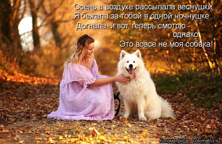 Котоматрица: Осень в воздухе рассыпала веснушки, Я бежала за тобой в одной ночнушке... Догнала, и вот теперь смотрю -  однако... Это вовсе не моя собака!