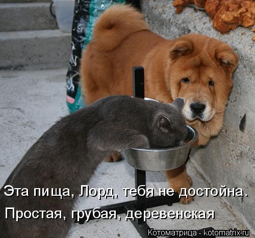 Котоматрица: Эта пища, Лорд, тебя не достойна. Простая, грубая, деревенская