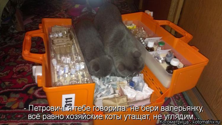 Котоматрица: - Петрович! я тебе говорила: не бери валерьянку, всё равно хозяйские коты утащат, не углядим...
