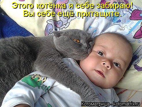 Котоматрица: Этого котёнка я себе забираю! Вы себе ещё притащите.