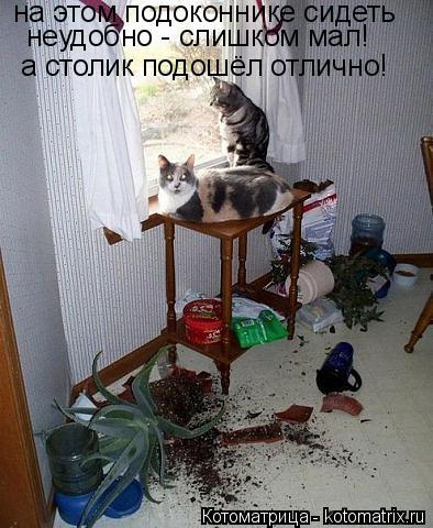 Котоматрица: на этом подоконнике сидеть неудобно - слишком мал! а столик подошёл отлично!